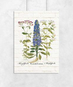 Edukacyjny plakat z polnymi kwiatami do przedpokoju