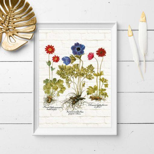 Kolorowy plakat z łacińskimi nazwami anemonów