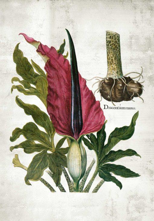 Kolorowy plakat z motywem botanicznym