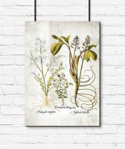 Kwiat frangipani - Plakat florystyczny do biura