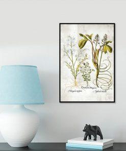 Kwiat frangipani - Plakat florystyczny do gabinetu
