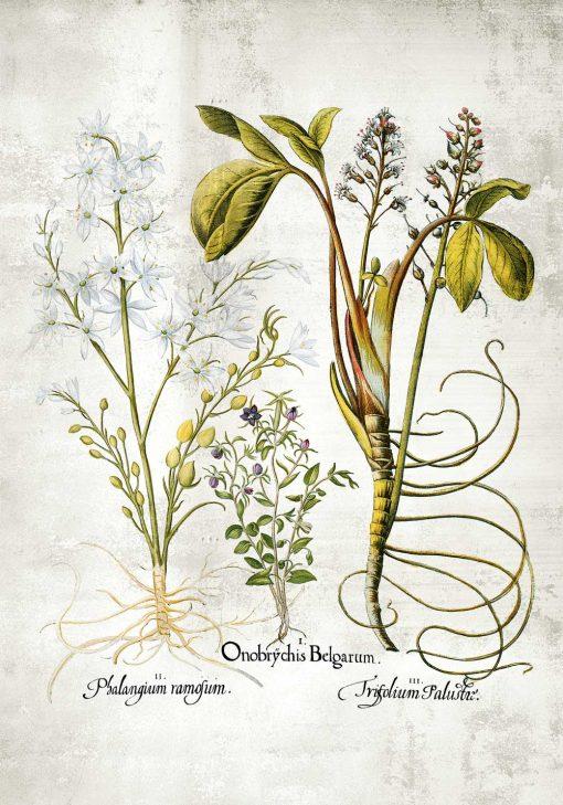 Kwiat frangipani - Plakat florystyczny do kuchni