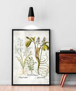 Kwiat frangipani - Plakat florystyczny do salonu
