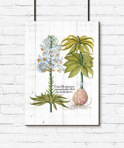 Plakat biała lilia pomoc naukowa
