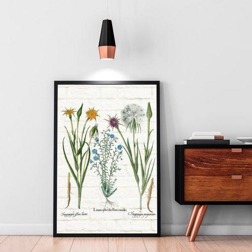 Plakat botaniczny - Salsefia purpurowa do biura