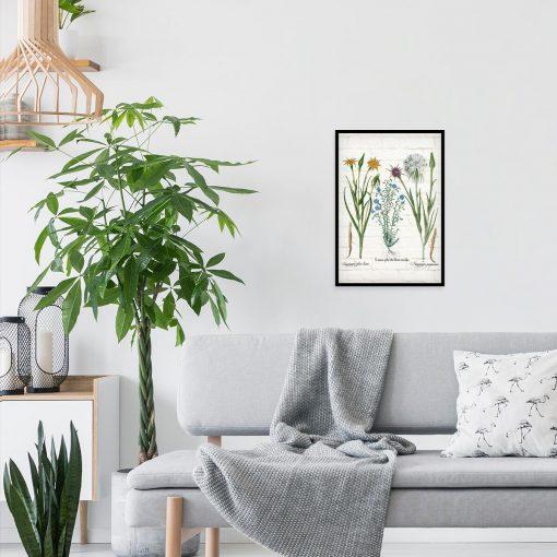 Plakat botaniczny - Salsefia purpurowa do salonu