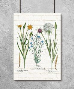 Plakat botaniczny - Salsefia purpurowa na prezent