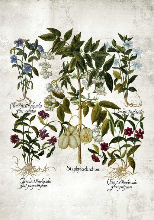Plakat botaniczny z barwnymi kwiatami do jadalni