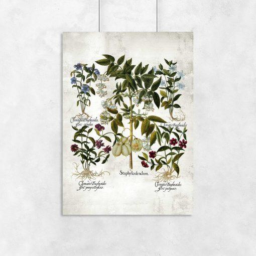 Plakat botaniczny z barwnymi kwiatami do przedpokoju