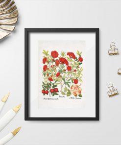 Plakat czerwone kwiaty i owoce moreli i śliwy