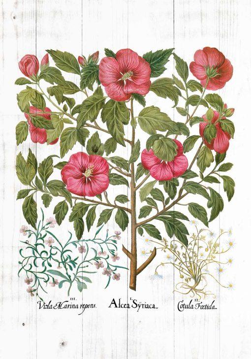 Plakat do apteki z ziołami