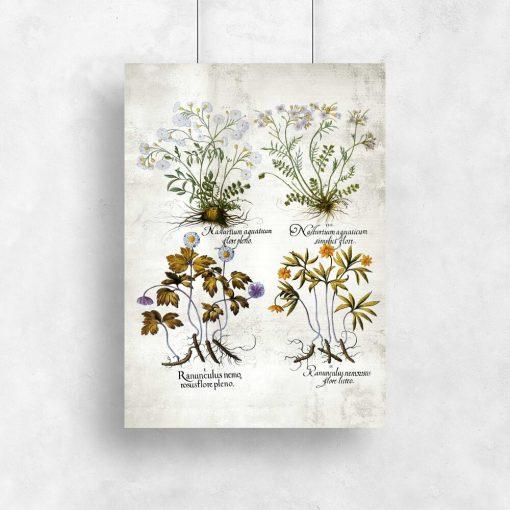 Plakat do sklepu z ziołami