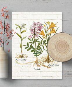 Plakat dydaktyczny z roślinami i nazwami po łacinie