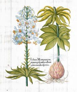 Plakat edukacyjny z białymi kwiatami