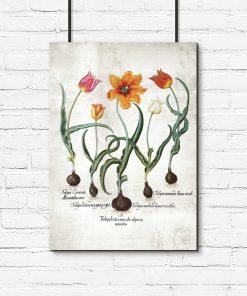 Plakat edukacyjny z tulipanem do biura