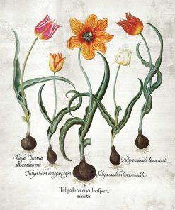 Plakat edukacyjny z tulipanem do kawiarni