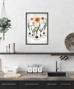 Plakat edukacyjny z tulipanem do kuchni