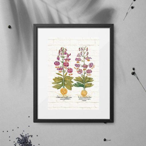 Plakat fioletowe lilie i korzenie