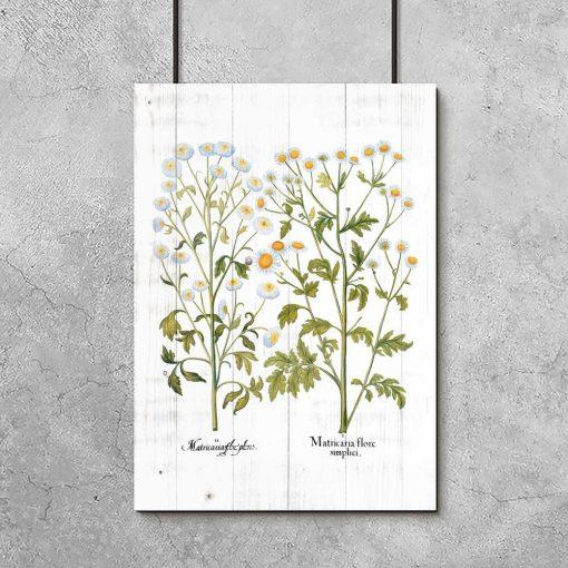 Plakat jako pomoc dydaktyczna z ziołami