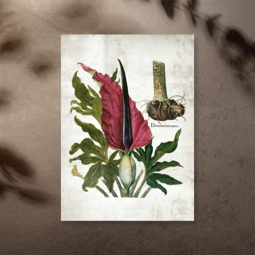 Plakat kolorowy z naukową nazwą rośliny zielnej
