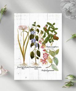 Plakat kwiaty i ich korzenie