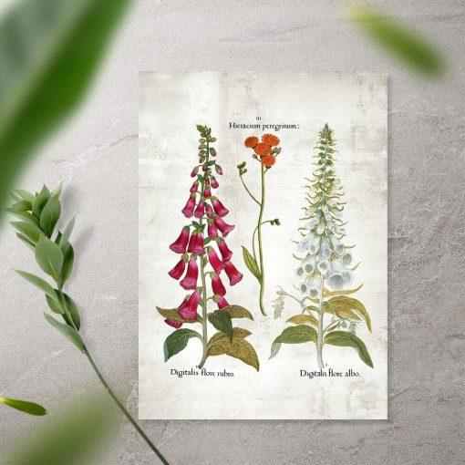 Plakat kwiaty ogrodowe białe i czerwone