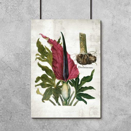 Plakat naukowy z kwitnąca rośliną