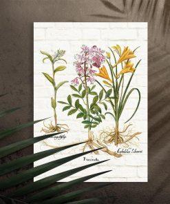 Plakat naukowy z roślinami i łacińskimi nazwami