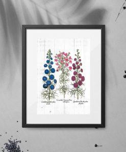 Plakat rośliny i ich system korzeniowy