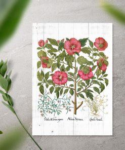 Plakat rośliny pożyteczne dla człowieka