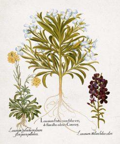 Plakat rośliny z drobnymi kwiatuszkami