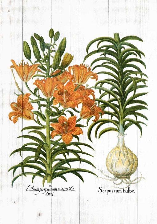 Plakat rustykalny z motywem lilii na tle desek