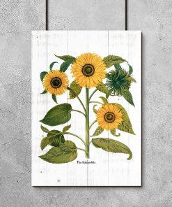 Plakat w żółtym kolorze ze słonecznikami