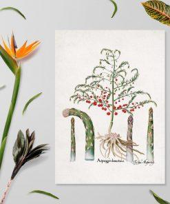 Plakat z asparagusem do dekoracji kwiaciarni