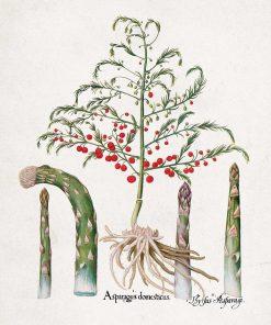 Plakat z asparagusem domowym