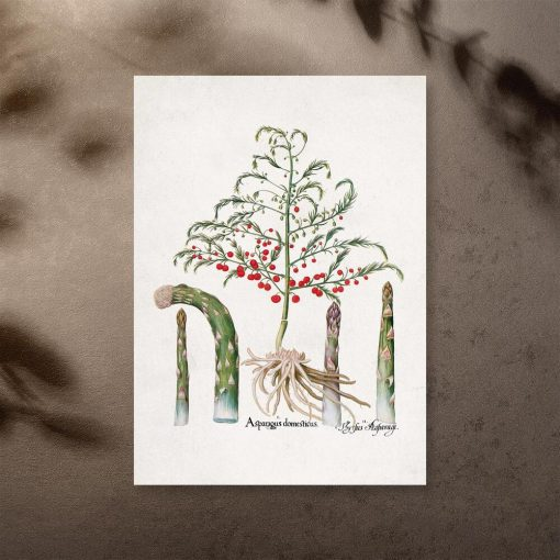 Plakat z asparagusem pierzastym do ozdoby kwiaciarni