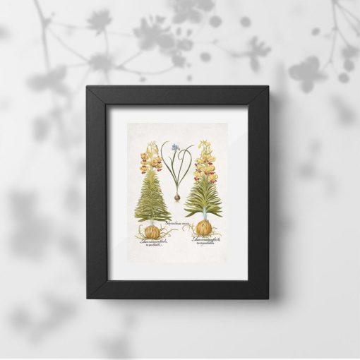 Plakat z cebulami roślin