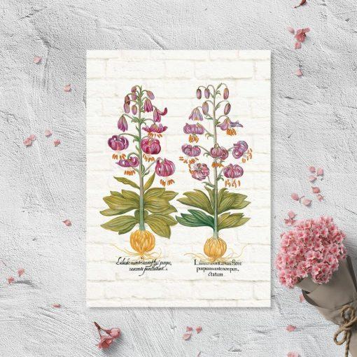 Plakat z fioletowymi liliami i cebulami