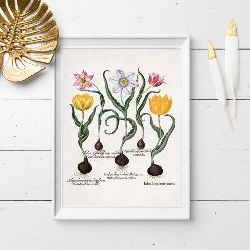 Plakat z gatunkami kwiatów ozdobnych