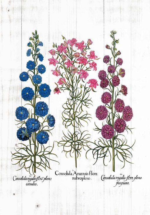 Plakat z gatunkami roślin łąkowych