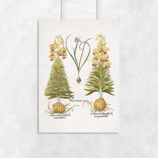 Plakat z kwiatami i naukowymi nazwami