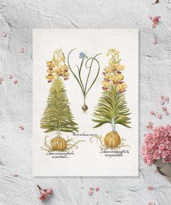 Plakat z kwiatami: irys i lilia i łacińskie nazwy