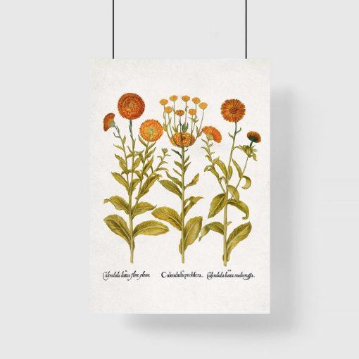 Plakat z kwiatami jako pomoc dydaktyczna