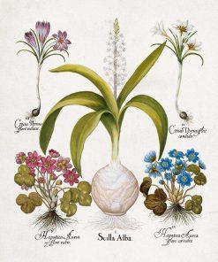 Plakat z kwiatami - Krokus do jadalni