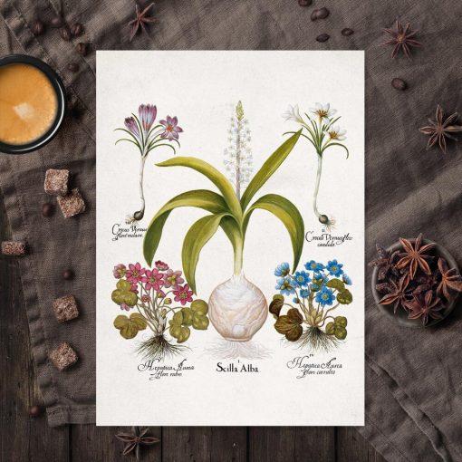 Plakat z kwiatami - Krokus do kuchni