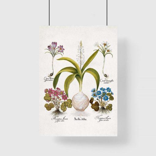 Plakat z kwiatami - Krokus do przedpokoju