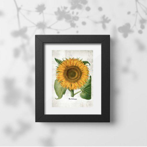 Plakat z kwiatem słonecznika do powieszenia w korytarzu