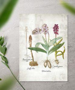 Plakat z kwiatuszkami z łąki