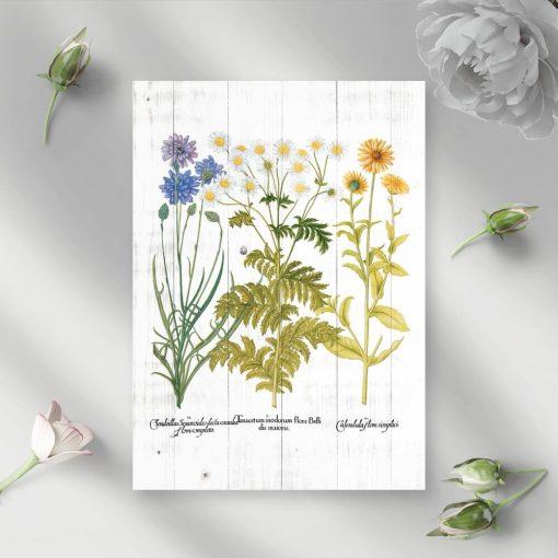 Plakat z kwitnącymi roślinami zielnymi