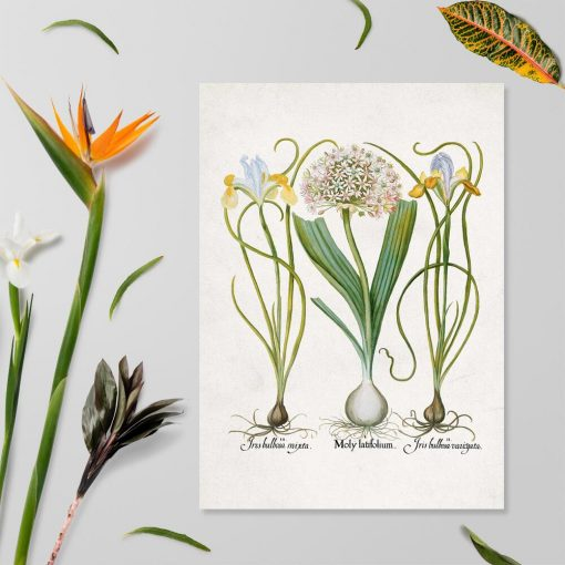 Plakat z łacińskimi nazwami kwiatów